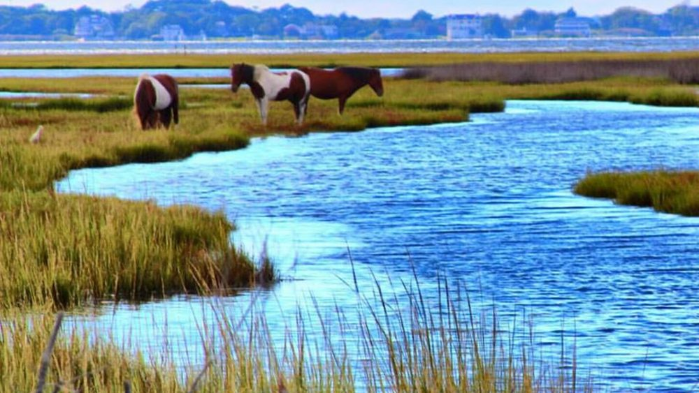 assateague tours