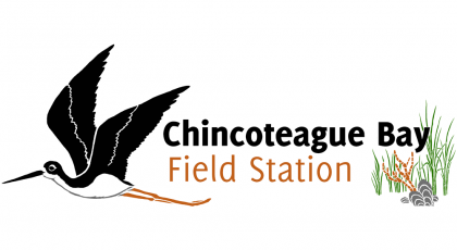 chincoteague bay field station
