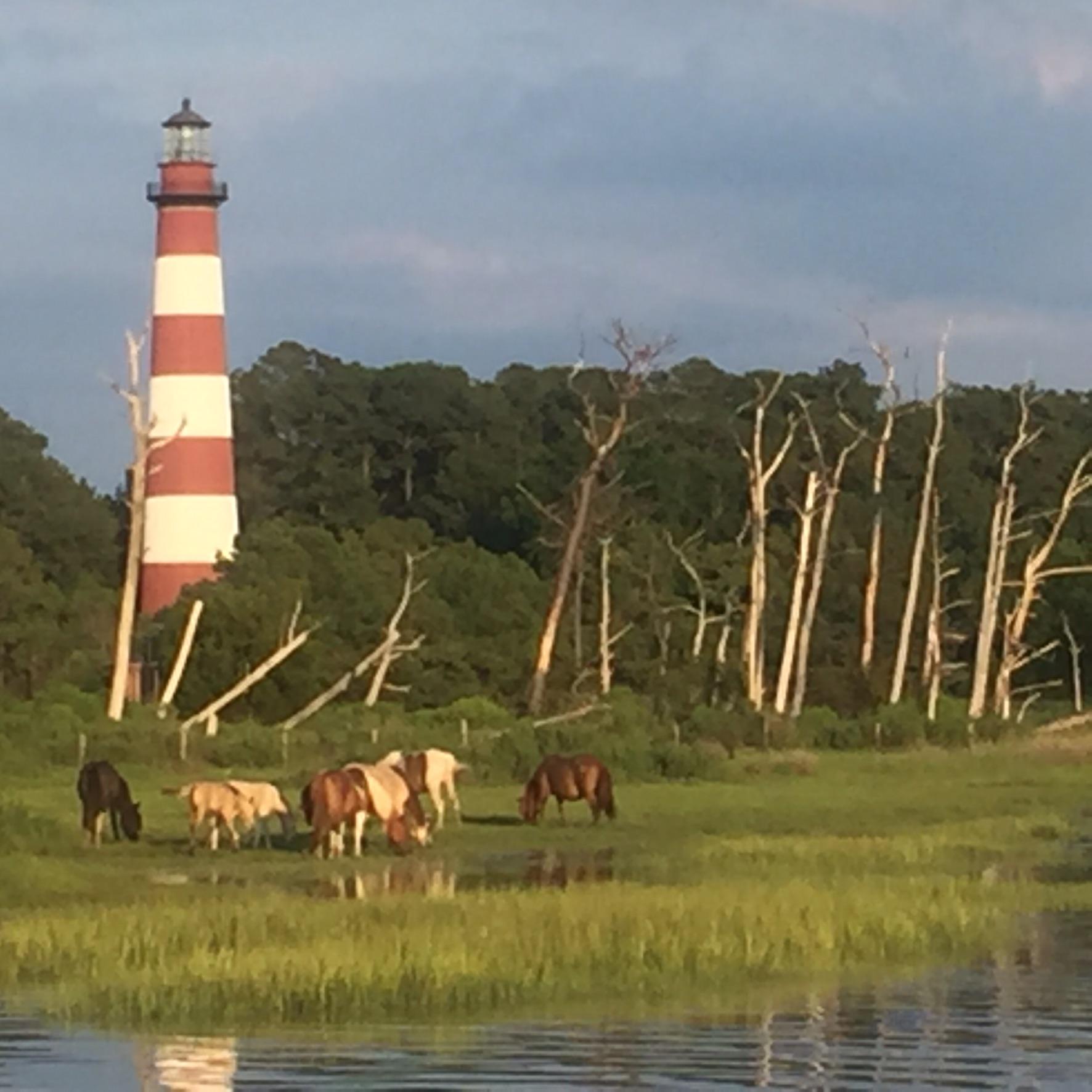 Chincoteague Wild Ponies, Assateague Island Snow Hill, VA