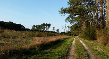 the nature conservancys brownsville preserve birding trail