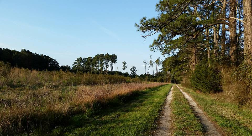 the nature conservancys brownsville preserve birding trail